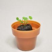 [식물/화분/봄/씨앗]리틀가든 미니포트
