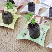 [식물/화분/봄/씨앗] 리틀가든 페이퍼포트