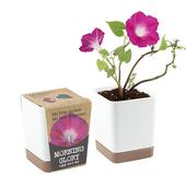 투톤사각화분-나팔꽃