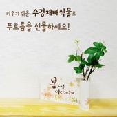 [식물/화분/봄/씨앗]수경재배세트_페이퍼거치대