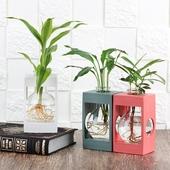 [공기정화식물] 컬러 아쿠아 플랜트