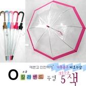 칼라 밴드 투명 비닐우산